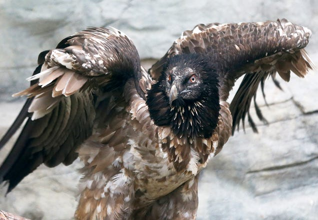 Vulture Capitalist: Avoid That Box IPO!