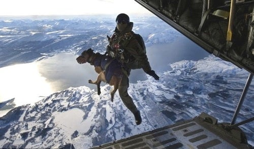 These Parachuting Dogs Will Win the War in Afghanistan
