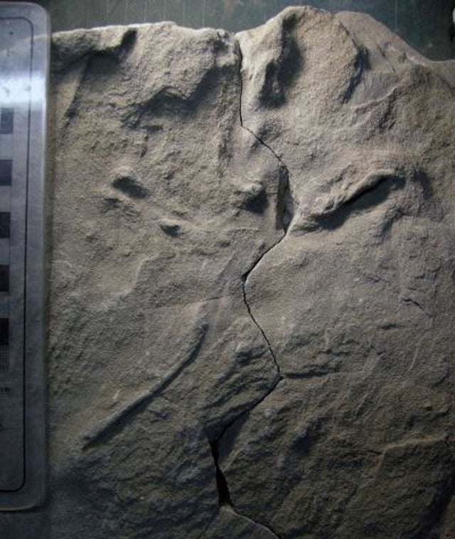 Big, 100-Million-Year-Old Bird Tracks Discovered in Australia