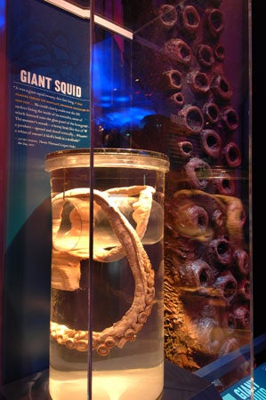 Exhibit Explores the Real Science Between Mythical Monsters