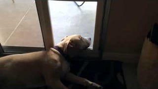 Today, We Are All a Dog Letting a Door Hi