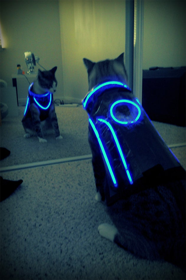 What Tron Needed Was More Pussy...