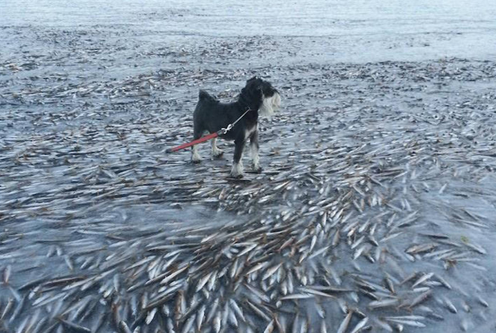 Wind Gust Flash Freezes Fish in Norwegian Bay