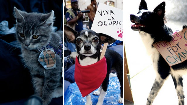 These Protesters Will Lick Your Face