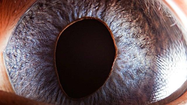 Incredible close-up photos of animals' eyes
