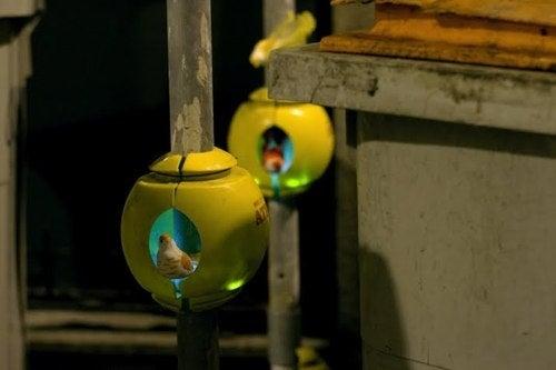 Urban Nest Gallery