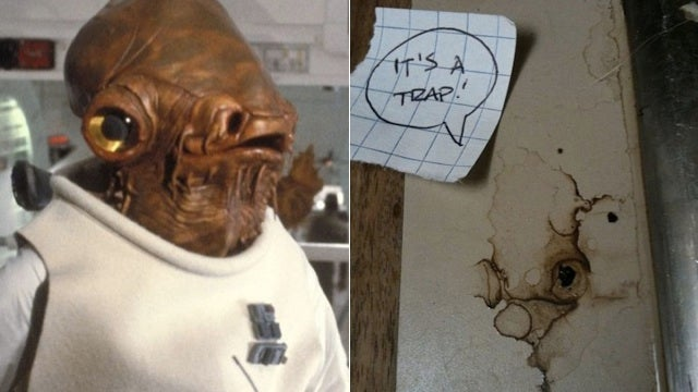 How Many Times Do You Have to Watch Star Wars to Know When a Water Stain Looks Like Admiral Ackbar?