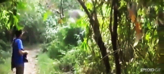 Guy waves his hand to stop the attack of a charging elephant
