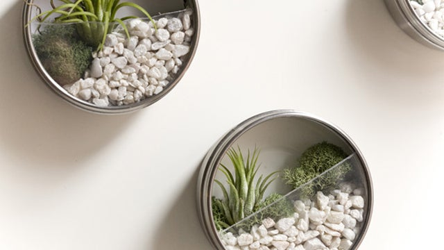 Make Your Own Miniature Terrarium Magnets