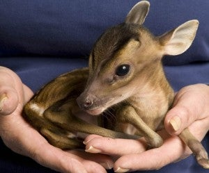 Orphaned Baby Deer Makes Us Melt • Indra Nooyi Named Most Powerful Woman By Forbes