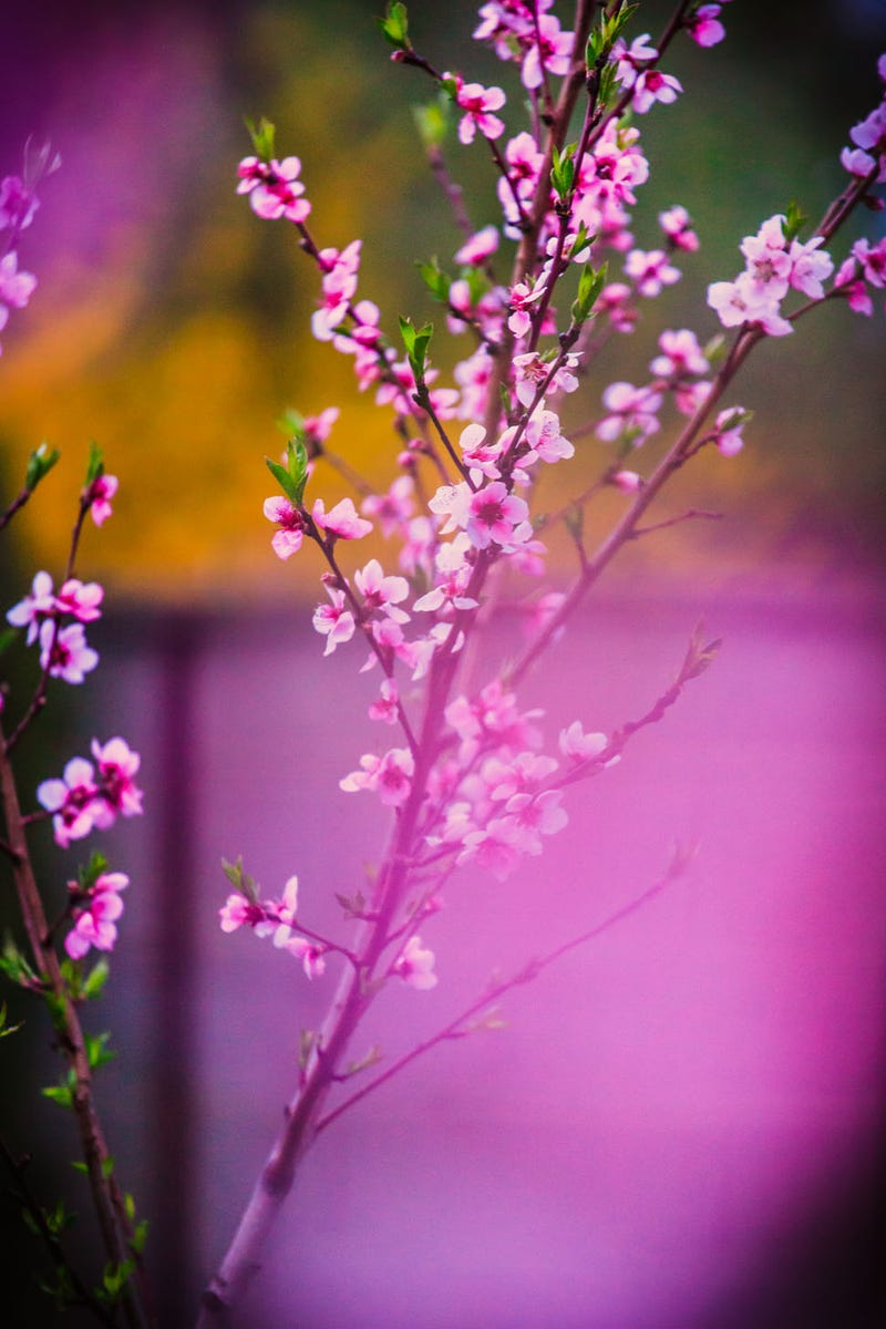 70 Spectacular Spring Wallpapers
