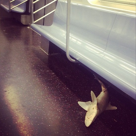 How Did This Shark End Up on a New York Subway Train?