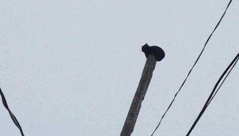 Fire Department Refuses to Rescue Cat