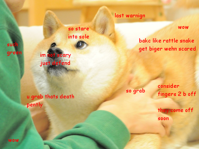 We who spoke LOLcat now speak Doge
