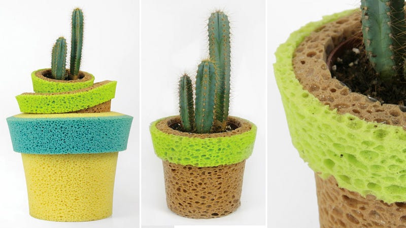 Sponge Pots Serve As Life Support For Plants You Forget To Water