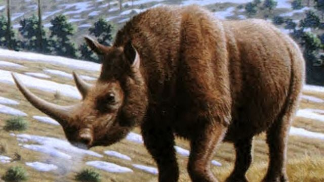 The huge rhino fossil that inspired Ancient Greek myths