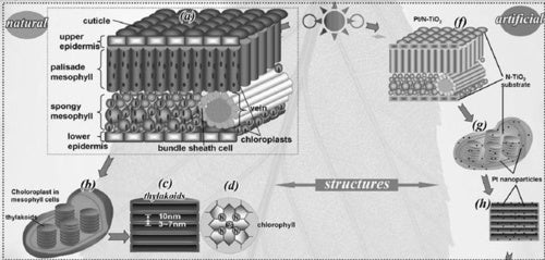 Artificial Leaf Is Key To Carbon-Free Hydrogen Economy