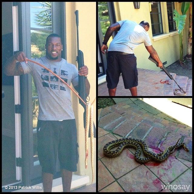 Trespassing Snake Brutally Murdered With Pellet Gun By Patrick Willis