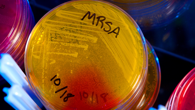 We Found a New Antibiotic, and Better Yet, a New Way to Find Antibiotics
