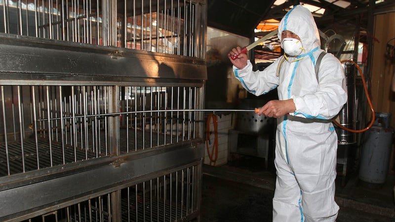 """Deadly New Bird Flu Strain """"Passed Between Humans"""" for First Time"""