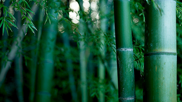 "How Finding ""Overnight Success"" Is like Growing Bamboo"