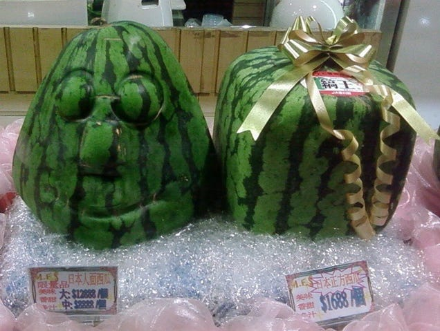 Japan has more than just square watermelons way more - Square watermelons how and why ...