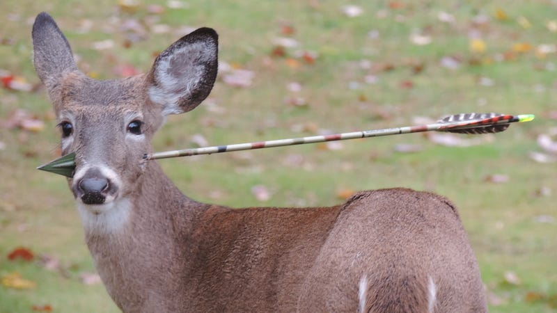 Awesome biologists rescued a deer by removing an arrow from its head