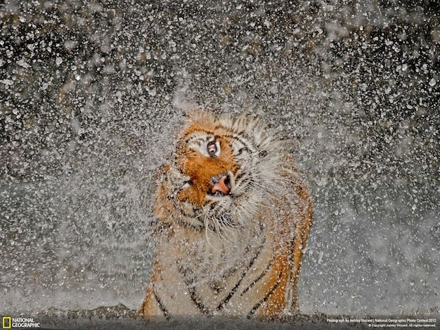 The winning images from Nat Geo's 2012 Photography Competition will blow you away