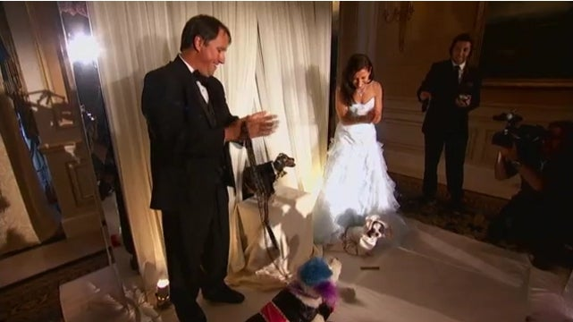 Triumph the Insult Comic Dog Poops All Over the World's Most Expensive Dog Wedding