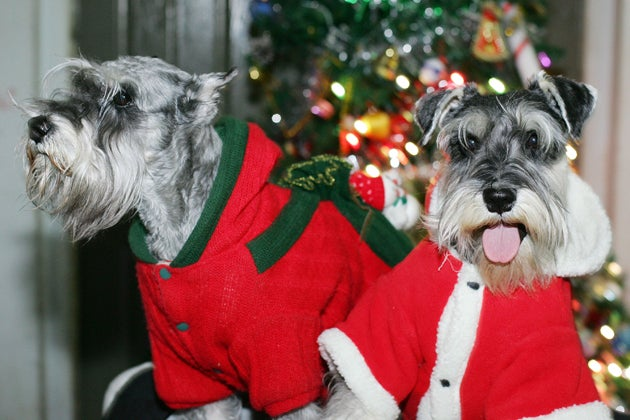 More Dogs Getting Christmas Presents Than Cats