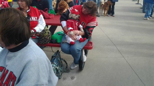 Adorable Dog Wins Stupid Contest At Reds Game