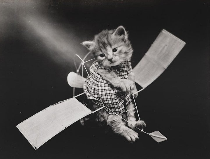 Old Timey LOLcats!