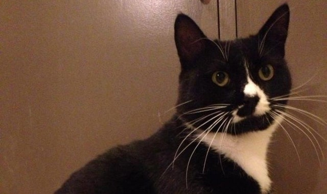 Animal Welfare Group Rescues Sick Cat Who Ate Nothing But Cheeseburgers for a Year