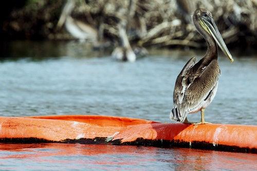 'BP Squad' Prepares Criminal Investigation of Oil Spill Companies