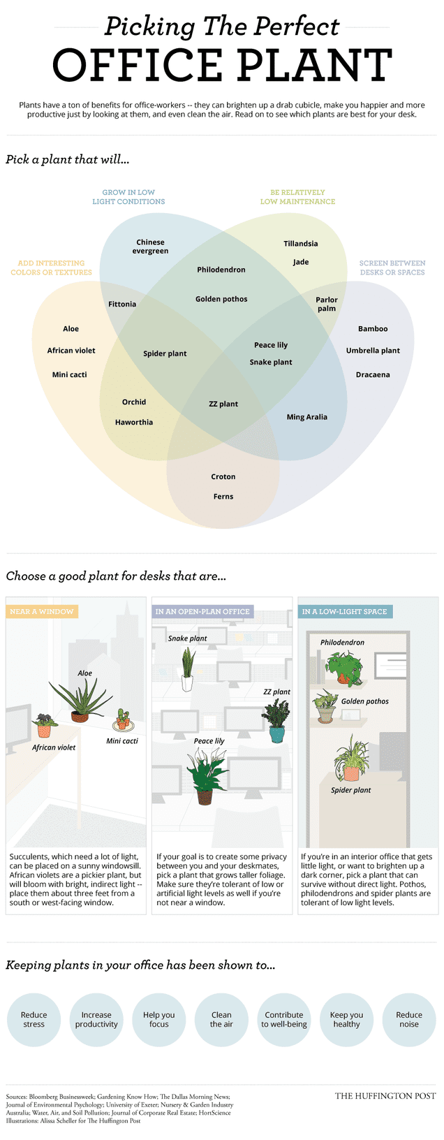 Pick the Right Office Plant for Your Environment with This ...