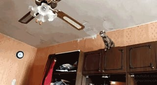"""I have just discovered the Tumblr """"Animals Sucking At Jumping"""""""