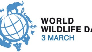 World Wildlife Day: Education and Celebration!