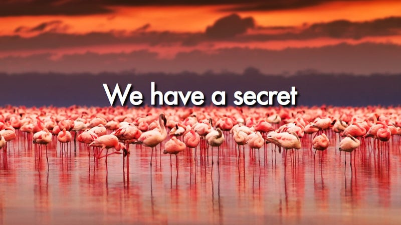 You'll never guess where flamingos hide their erectile tissue