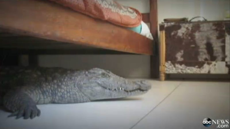Man Discovers He Slept Through the Night with a Monster Under His Bed