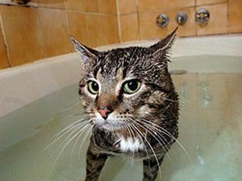 Cat Says: F#¢k Off.