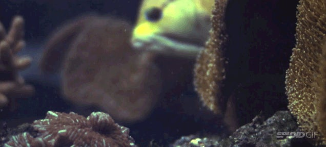 This video shows that freaking fish are the closest thing to Alien