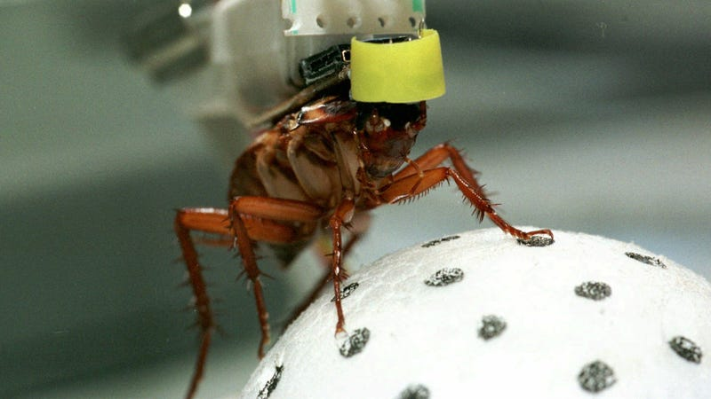 Bionic Hero-Cockroaches Might Become First Responders in Natural Disasters