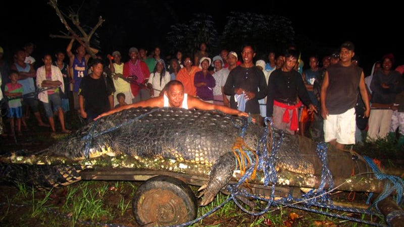 Holy F**K That's a Big Crocodile