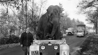Here's An Elephant Driving A Land Rover