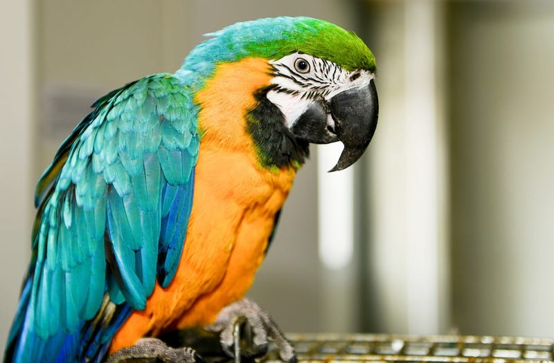 Talking Parrot Helps Police Solve Mysterious Murder Case