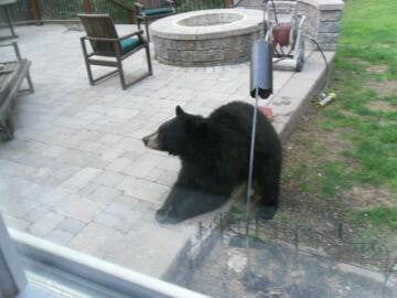 There's A Bear In Trey Wingo's Backyard