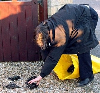 100+ Starlings Fall Dead Out Of The Sky And Into British Woman's Yard