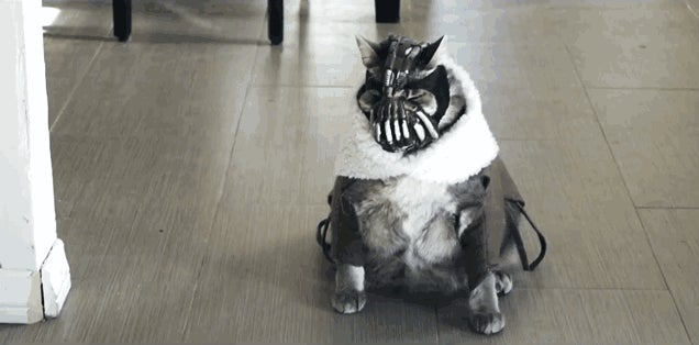 Most Cats Are Basically Bane