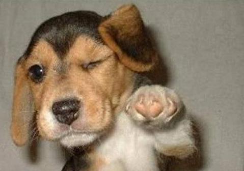 Puppies: America's Last Taboo