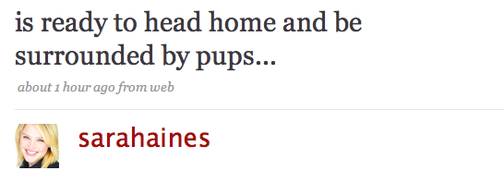 Saucy Twitterati Dream of Puppies Dressed as Gene Simmons